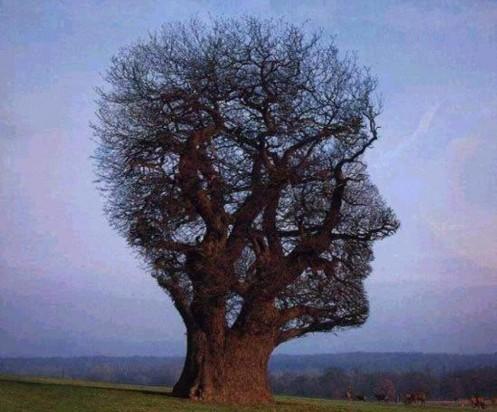 sanacion del arbol genealogico