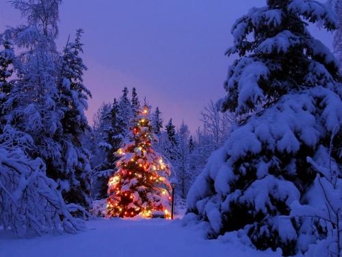 Arbol_de_Navidad_Iluminado-