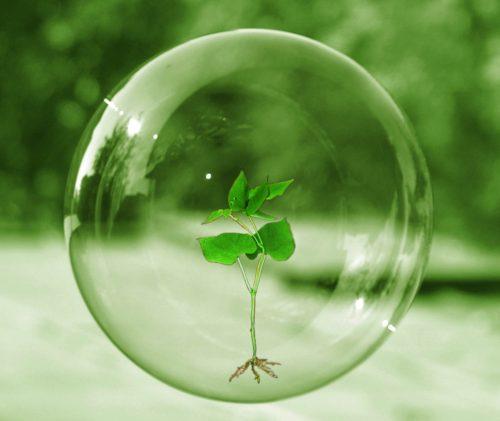 burbuja con una planta adentro