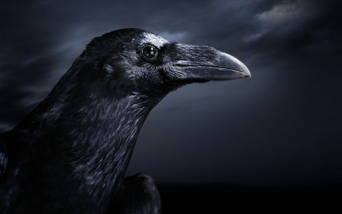 ave de rapiña