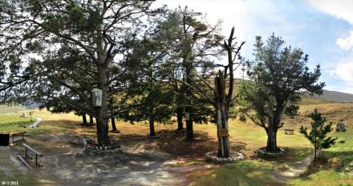 pinos de garabandal
