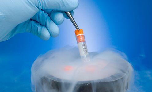 Resultado de imagen para congelacion de embriones