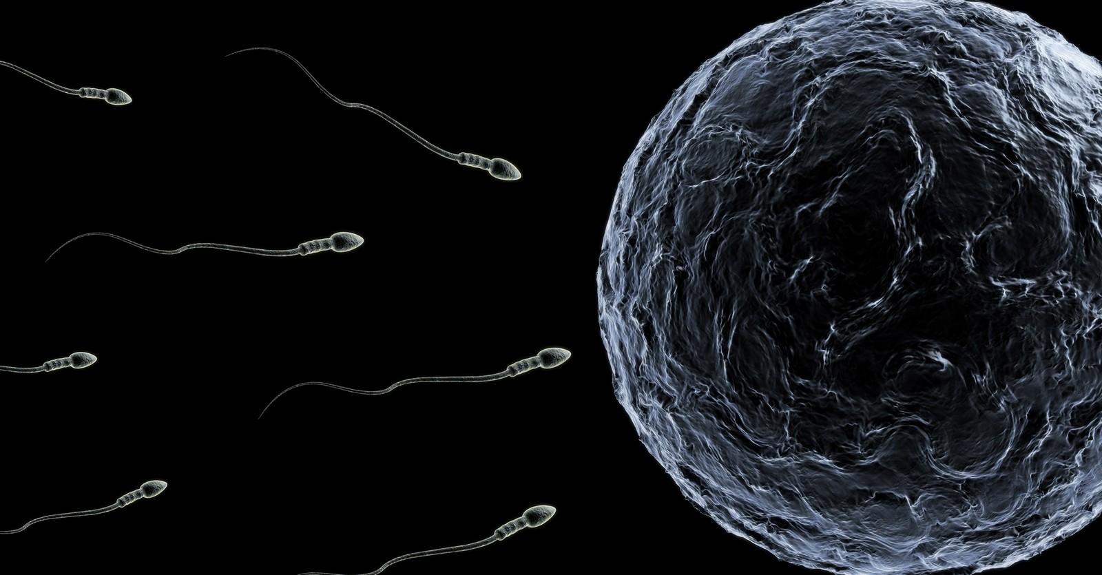 Porqué la Iglesia es Contraria a la Donación de Esperma y los Vientres de Alquiler