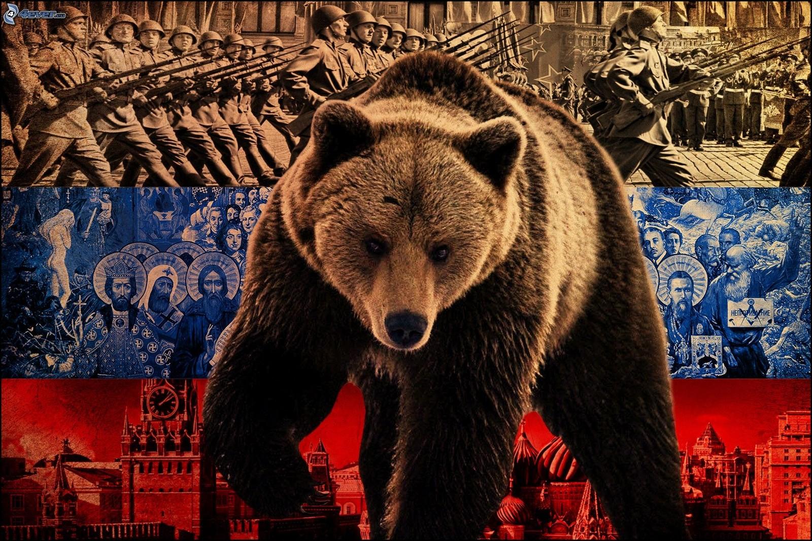 oso ruso fondo