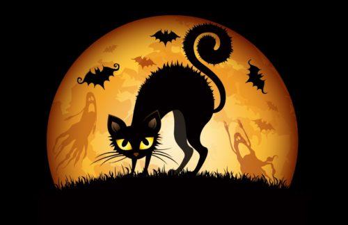 gatos en halloween
