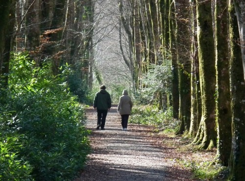pareja caminando por camino de arboles