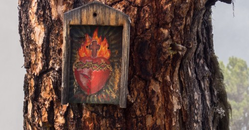 sacred heart on a tree background