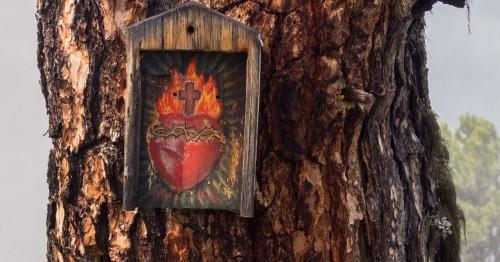 sagrado corazon en un arbol fondo