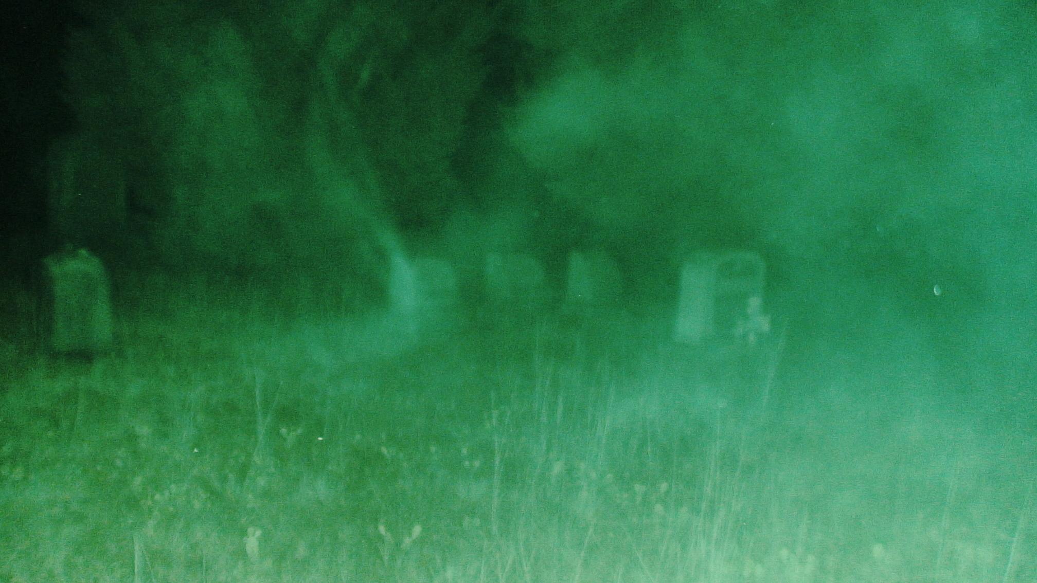 Los Significados Ocultos del Demonio Disfrazado de Animal