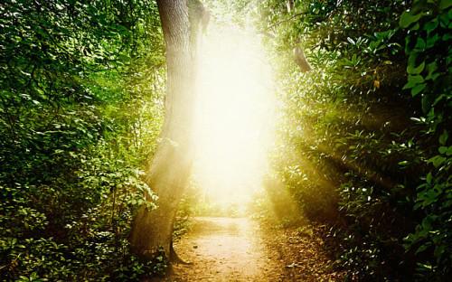 luz en un bosque