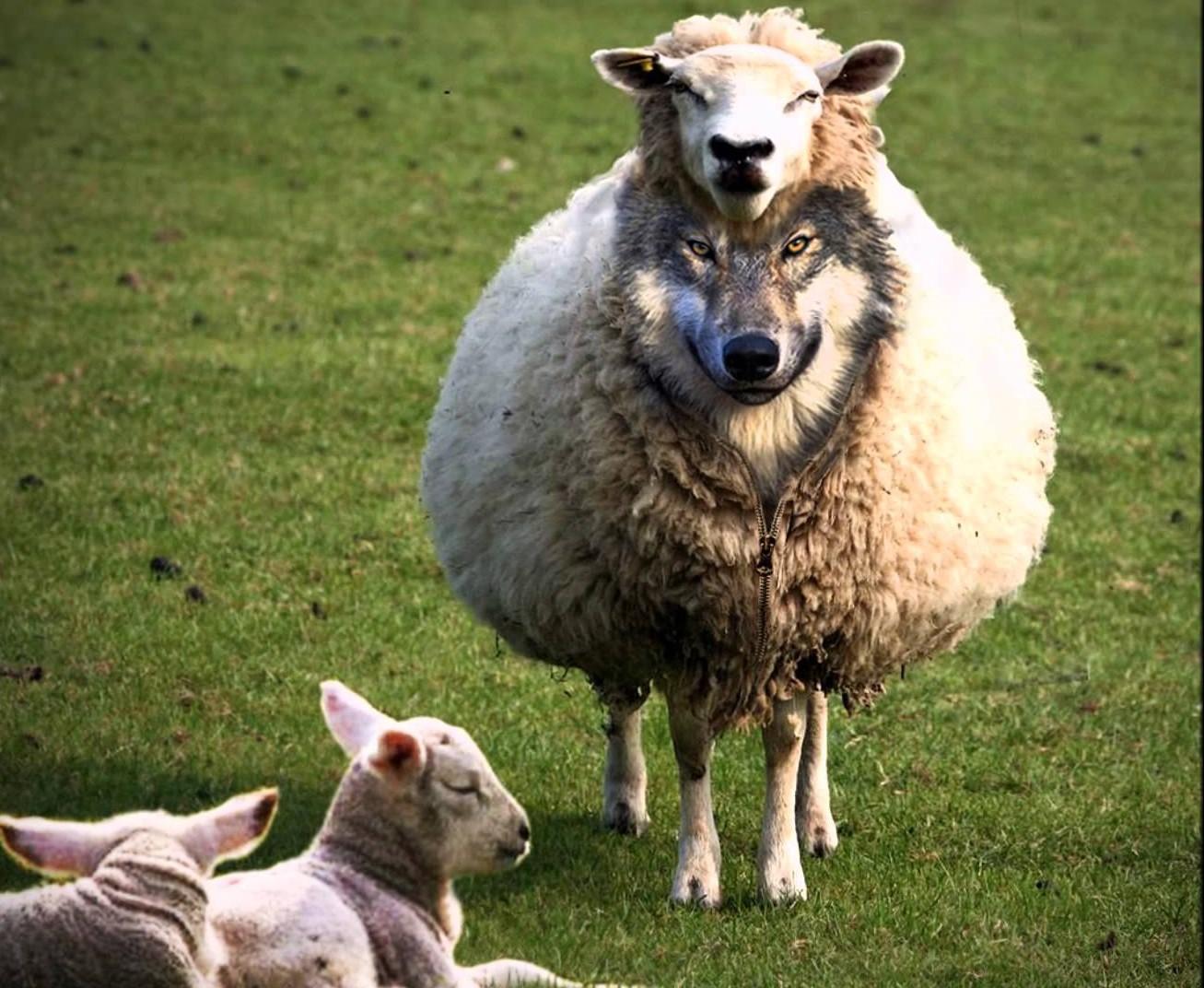 lobo con piel de oveja fondo