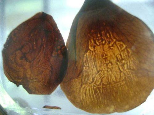 Petalos caídos en Lipa durante la aparición