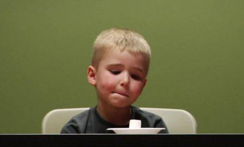 niño mirando el marshmallow