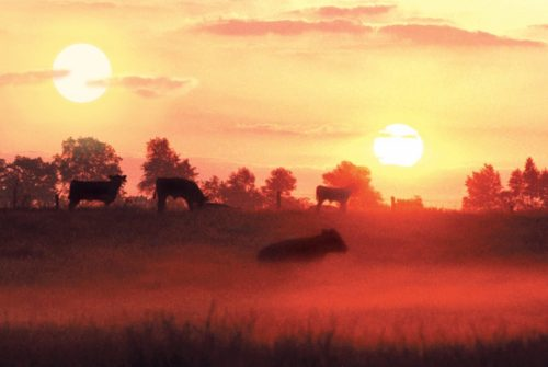 dos soles vistos desde un campo