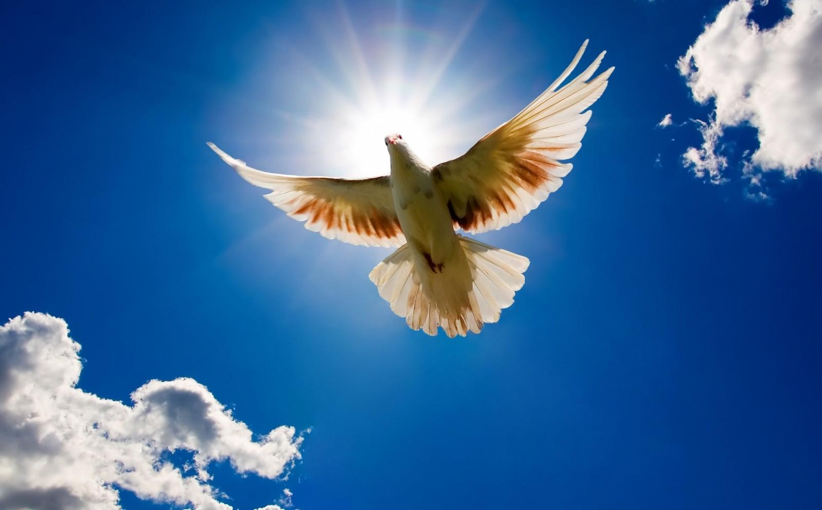 Qué Es y cómo Conseguir la Paz Sobrenatural