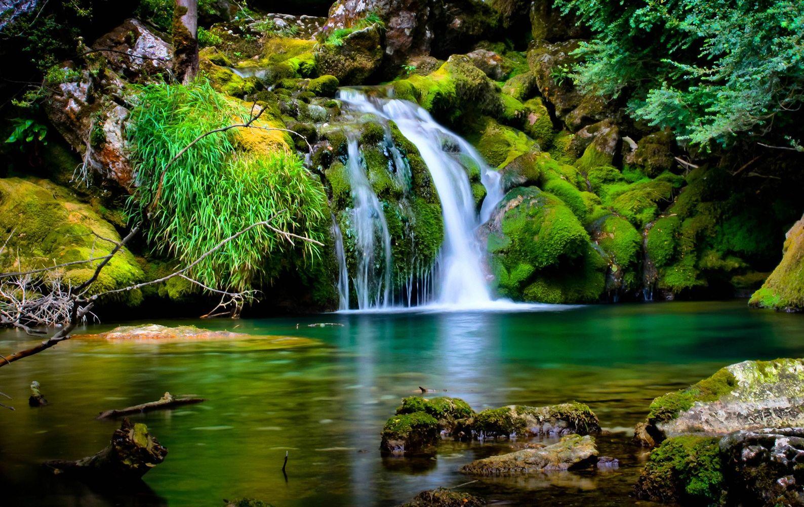 ¿Dónde Está ahora el Árbol de la Vida que Estaba en el Jardín del Edén?