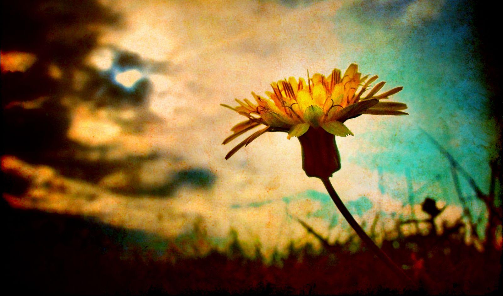 Cómo la Resistencia contra la Humildad produce Personalidades Narcisistas