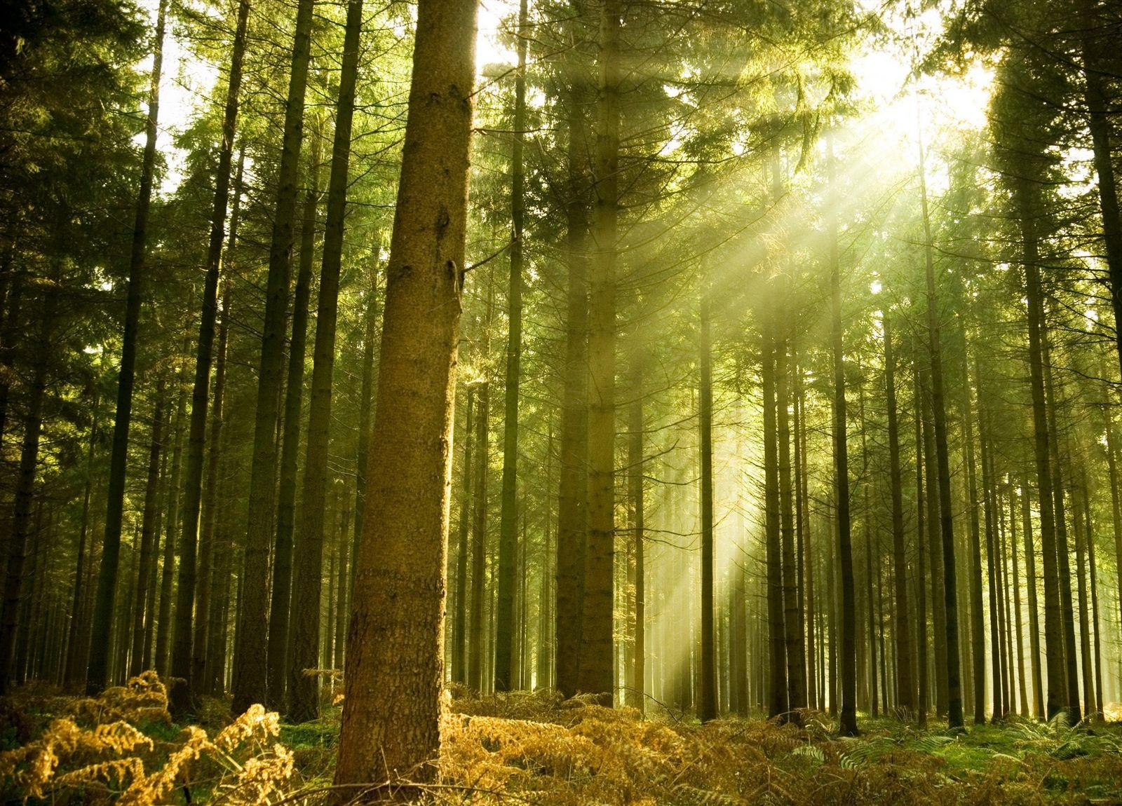 Las Virtudes que te Ayudarán a tener la Providencia de tu Parte