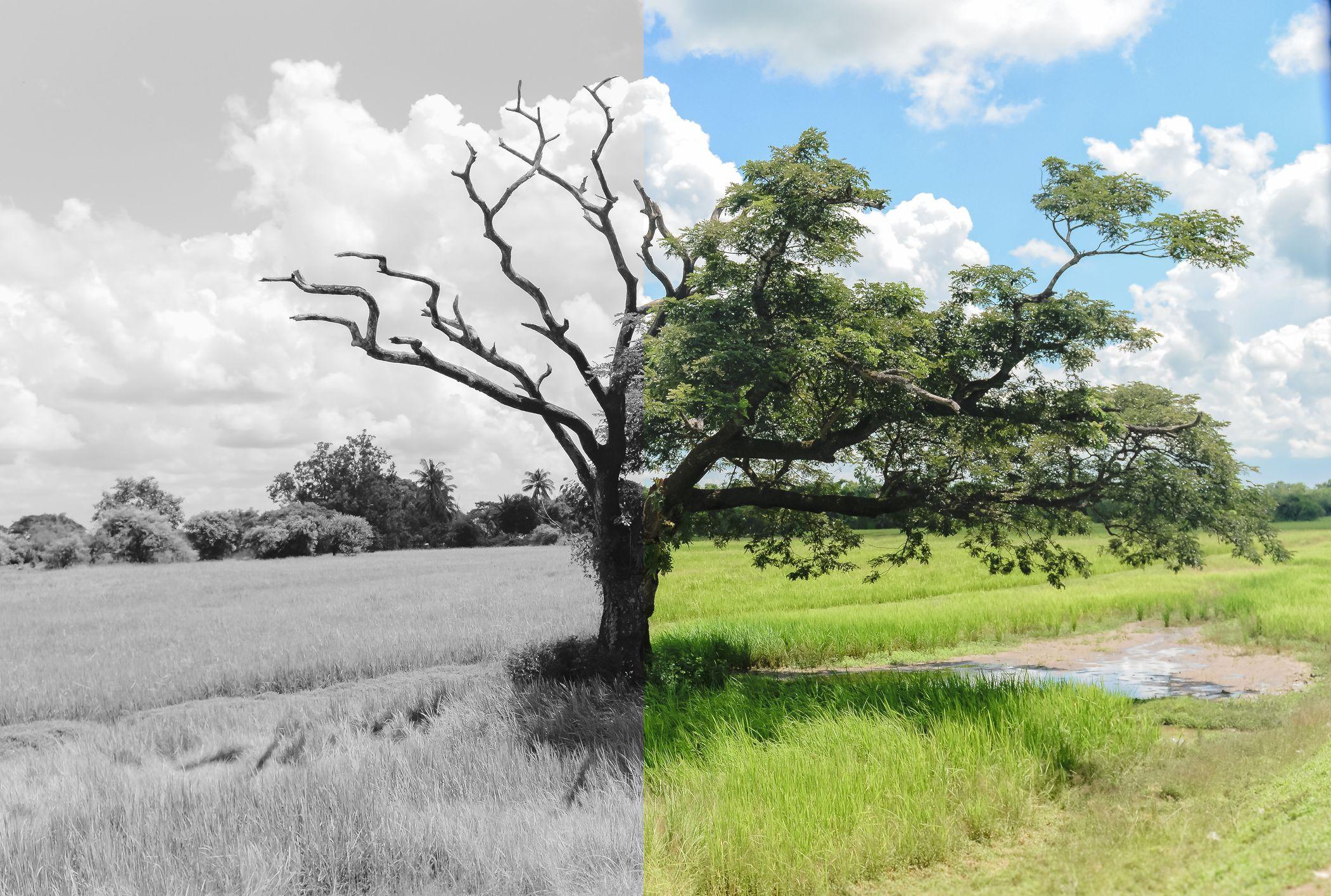 Por qué los Cambios en la Naturaleza son el Signo de Dios Purificando la Tierra